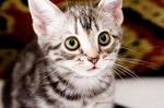 グーグーだって猫である_02.jpg