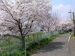 桜20070407_01.jpg