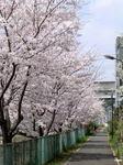 桜20070407_02.jpg