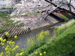 桜20070407_03.jpg