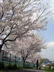 桜20070407_04.jpg