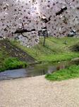 桜20070407_05.jpg